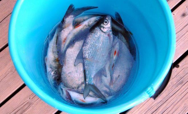 2085 fresh fish big 1279955