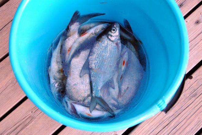 2085_fresh_fish_big-1279955-3800902